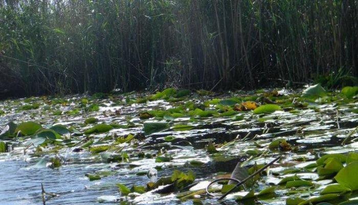 Rezervatia naturala Delta Dunarii