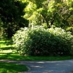 Grădina Botanică din Timișoara – județul Timiș