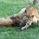 Grădina Zoologică din Târgu Mureș
